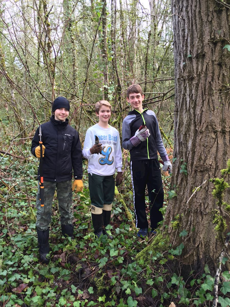 Removing invasive species in the natural areas