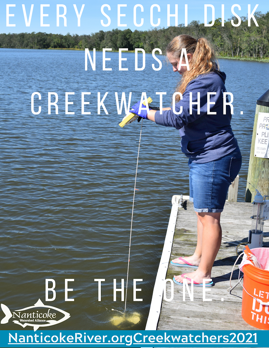 Become a Creekwatcher in 2021!