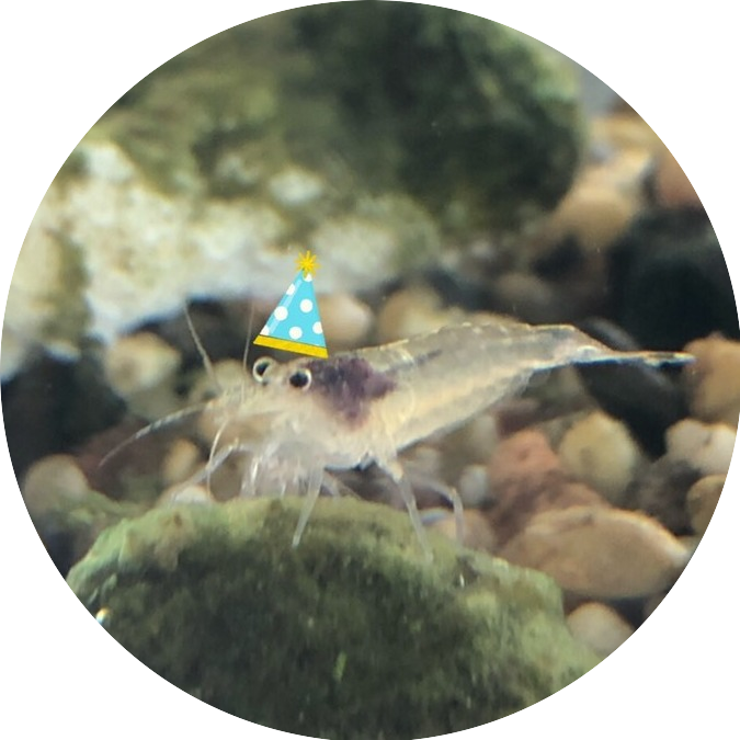 shrimply